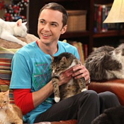 THE BIG BANG THEORY: This Show Has Gone To The… Cats?