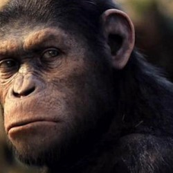 Caesar's Mate Cornelia is Cast in DAWN OF THE PLANET OF THE APES