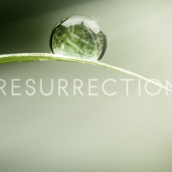 Adding Another Show to Our 2013-14 Calendar – ABC's RESURRECTION
